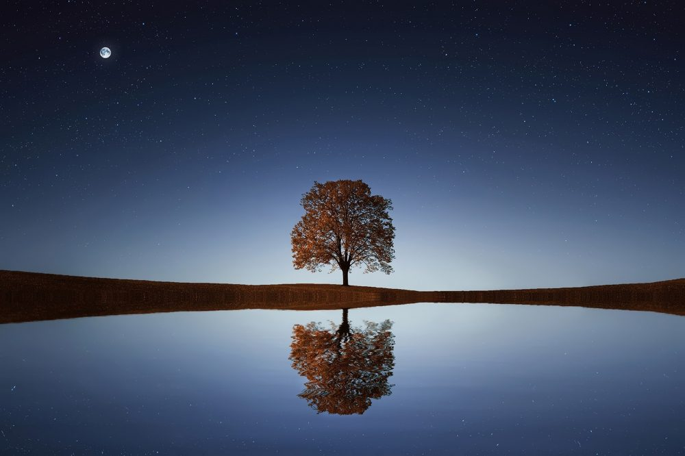 Tree reflected in lake